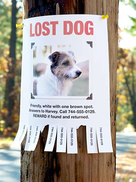lost yorkie lost pet quotes quotesgram