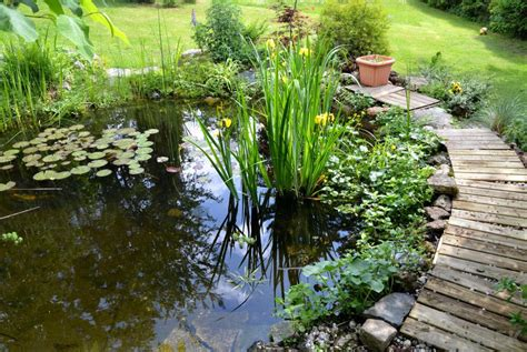 What Is A Garden by What Is A Bog Garden With Pictures