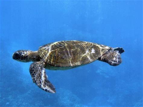 imagenes animales acuaticos y terrestres animales acu 193 ticos animales terrestres y acu 193 ticos