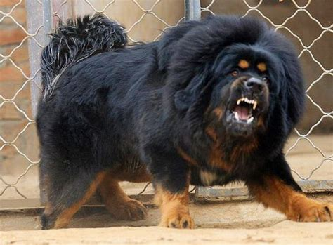 banned breeds top 10 banned breeds
