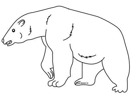coloring polar bear