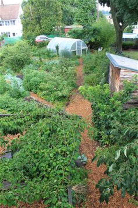 backyard permaculture design 1000 ideas about permaculture design on pinterest permaculture geoff lawton and