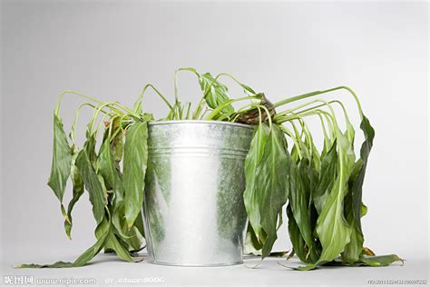 Indoor House Plant by
