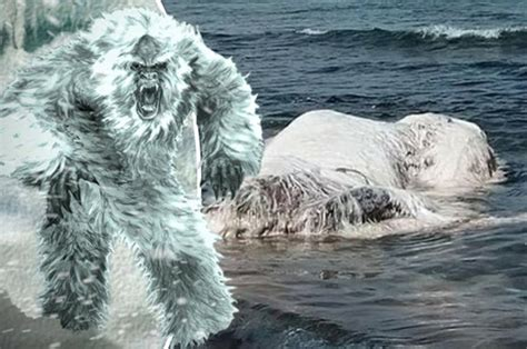 yeti found massive hairy monster washes up on beach