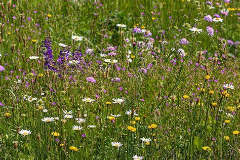 wilde bloemen in duitsland go wild met een wilde bloemenweide grdn urban