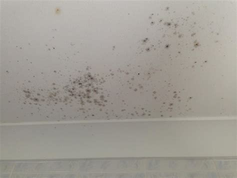bedroom condensation mould d
