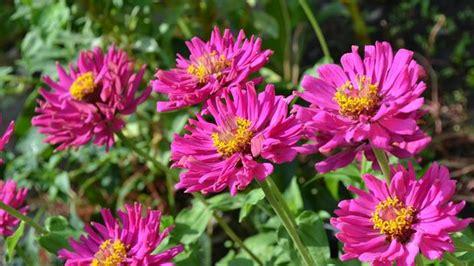herbstblumen garten herbstblumen f 252 r hochzeit oder garten sat 1 ratgeber