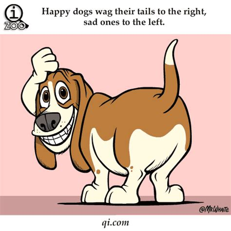 why do dogs wag their 10 reasons why do dogs wag their tails pet comments