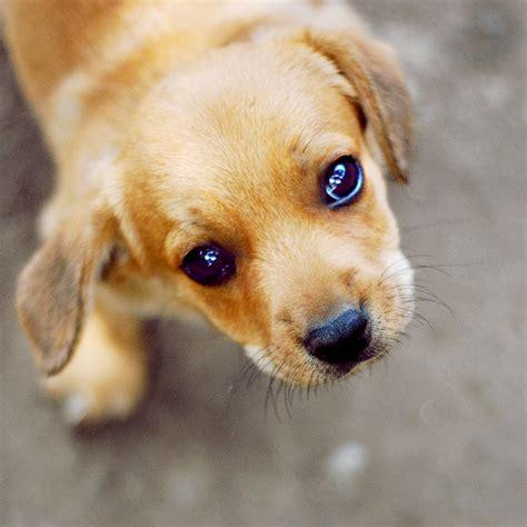 puppy eye puppy by ciuky on deviantart