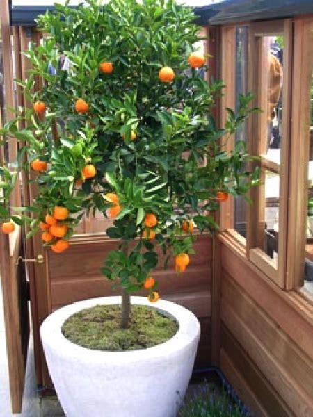 indoor gardening health news