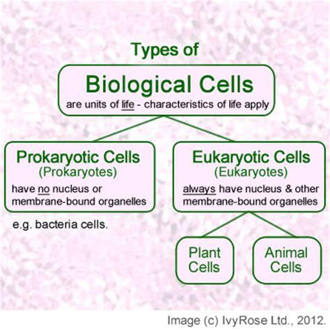 prokaryotic and eukaryotic cells