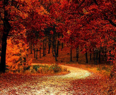 wallpaper autumn park fall foliage hd  nature