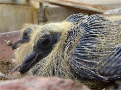 baby birds   help wildlife