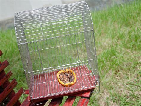 3 ways to catch a bird wikihow