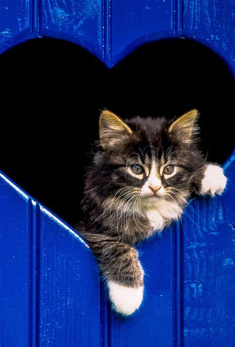 imagenes para fondo de pantalla gatos fondo de pantalla semanal gato adorable en iphoneros