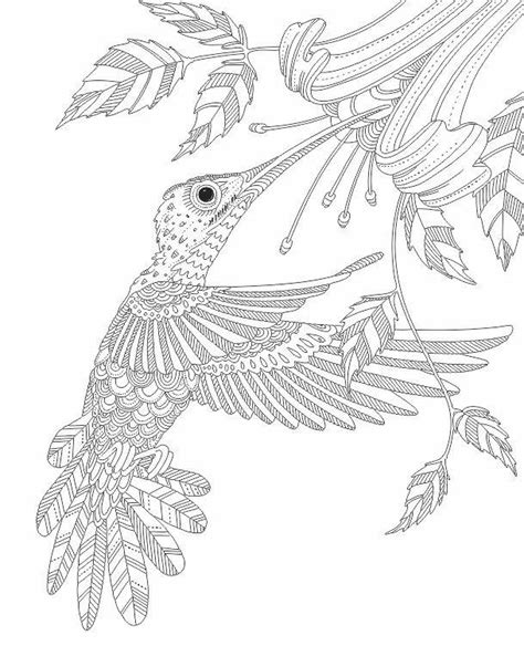 coloring pages for adults hummingbird hummingbird zentangle coloring pages colouring adult