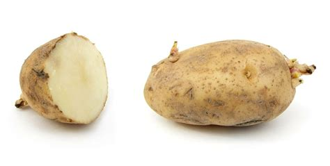 Potato Means by How To Plant Potatoes From How To Grow Potatoes