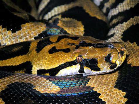 la piscina pi 249 grande mondo pictures to il serpente pi lungo mondo memes