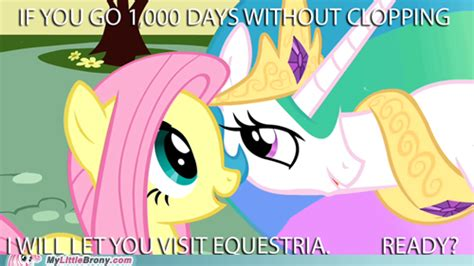 Know Your Meme Brony - best of luck to my single brony compadres my little pony friendship is magic know your meme