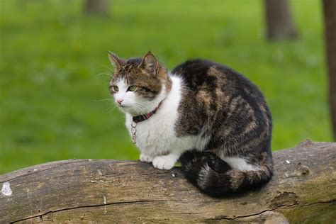 wheezing and wheezing in cats definition cause solution prevention cost