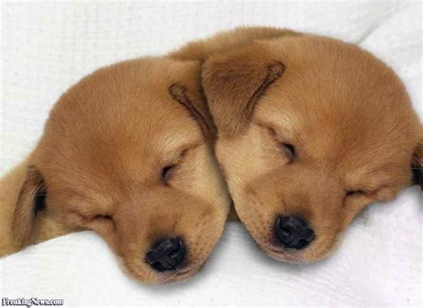 puppy news puppy with two heads pictures freaking news