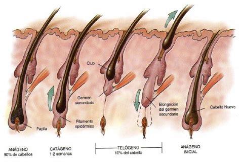dolor cuero cabelludo mujer soluciones a la alopecia androgen 233 tica