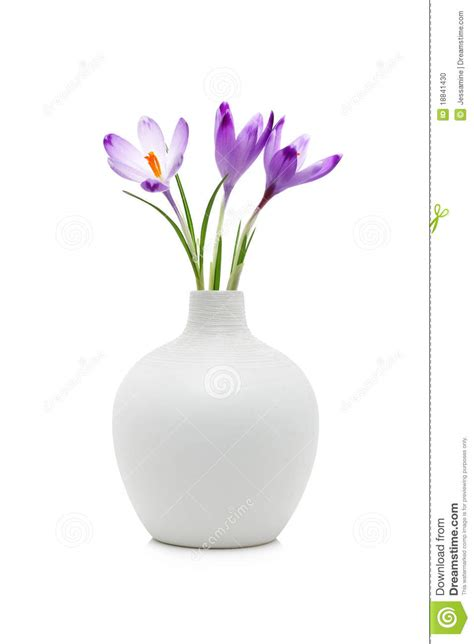 Flowers In White Vase by Crocus Flowers In White Vase Stock Photo Image 18841430