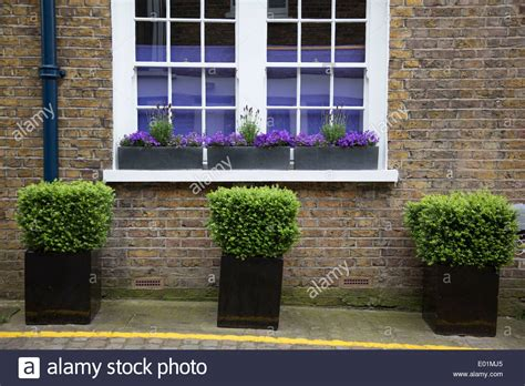 outside of a house three small potted bushes outside the front of a house on
