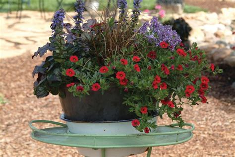 Pinterest Garden Container Ideas Container Gardening Gardening Ideas I Pinterest