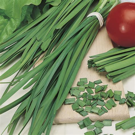johnsons garlic chives seeds wilko