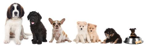 what breed is best for me quiz what is the best for me how to choose a breed of puppy dogdialog