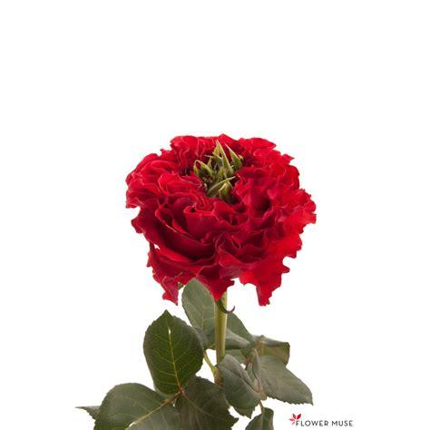 green center red garden rose red monster red roses