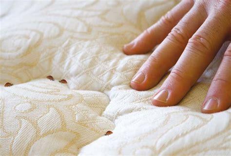 cimici da materasso cimici dei letti come riconoscerle e eliminarle