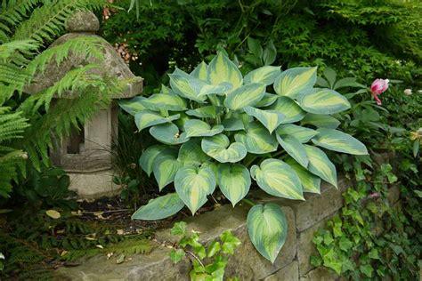 Garten Schattenpflanze by Garten Gestaltung Und Pflanzentipps Bambus Und Pflanzenshop
