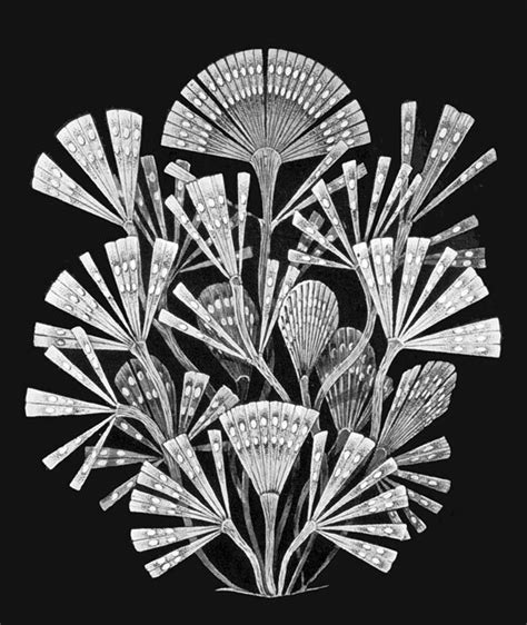 designspiration wiki best ernst haeckel kunstformen der natur images on