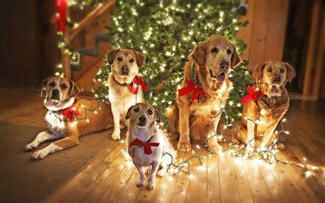 wie sucht man die weihnachtsbeleuchtung richtig aus