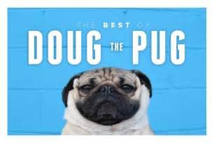doug le le ph 233 nom 232 ne doug the pug resonews