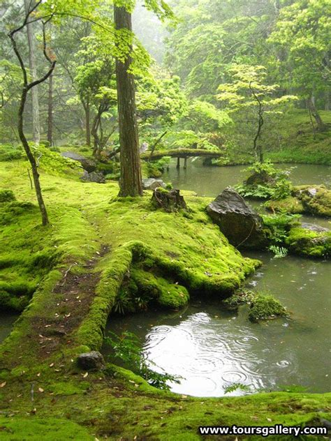 moss backyard japanese moss garden photography pinterest