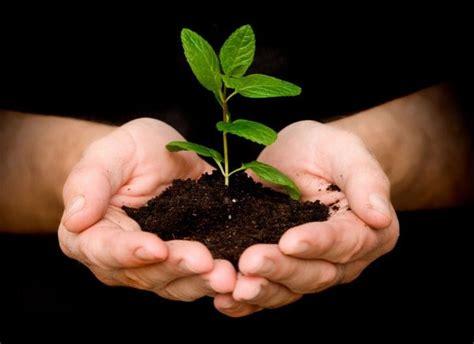 detik ini juga 8 alasan genting kamu wajib menanam pohon mulai detik ini juga