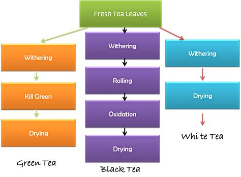 Process Of Tea Essay Mfawriting515 by Salt And Pepper With A Lot Of Spice Tea Week 3 Types