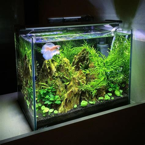 aquascape fish tank aquascape life in transparent tank pinterest