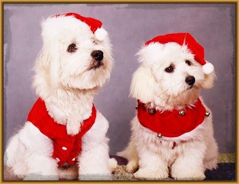 imagenes feliz navidad con perros imagenes de perros navide 241 os para imprimir imagenes de