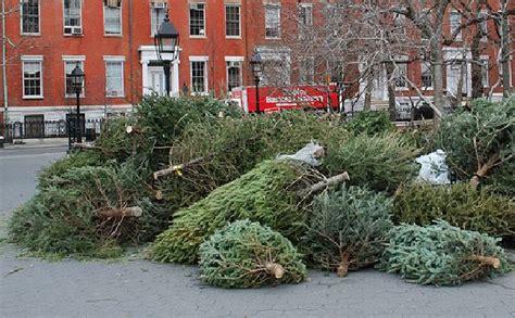 christmas trees used as fish habitat in berlin ecofriend