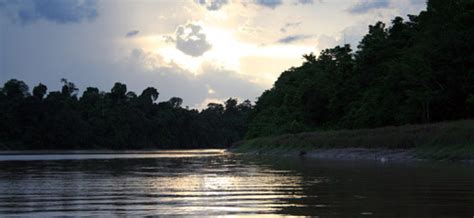 kinabatangan river cruise  sabah borneo malaysia