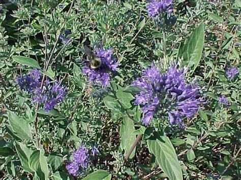 low maintenance flowers and shrubs low maintenance perennials