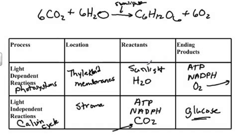 What Are The Products Of Light Dependent Reactions by Chapt 5 Photosynthesis Bio 101 At Tidewater Community