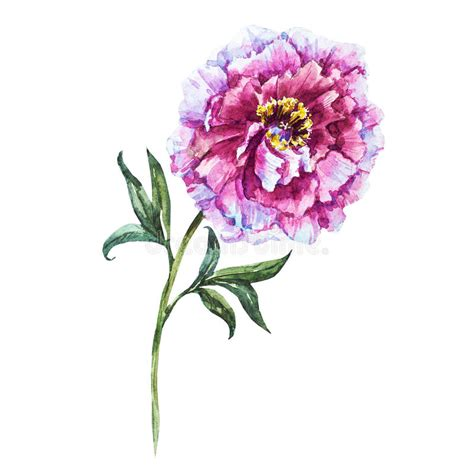 immagini fiori disegnati fiori disegnati a mano dell acquerello illustrazione di