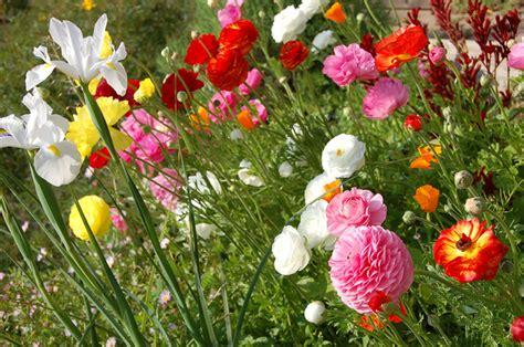 Fleurs De Printemps by Fleurs Printemps Narcisses Tout