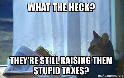 Sophisticated Cat Meme Generator - stupid memeaddicts