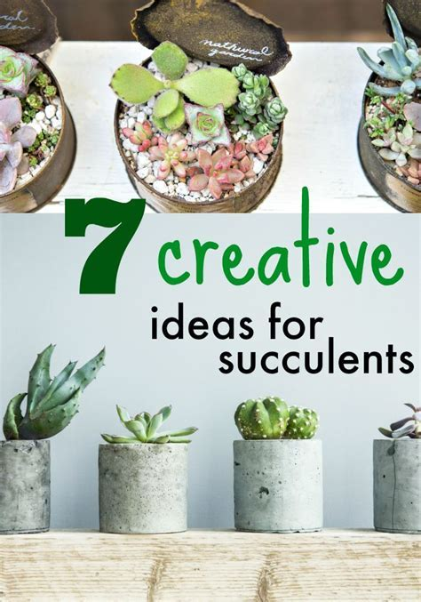 7 Ideas for Decorating With Succulents » Dollar Store Crafts